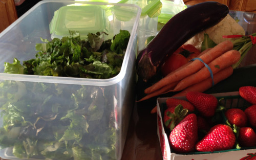 kinetic salad greensholder