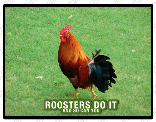 Roosters Do It  and So Can You
