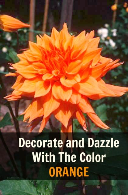 Decorate with a splash of orange this fall.