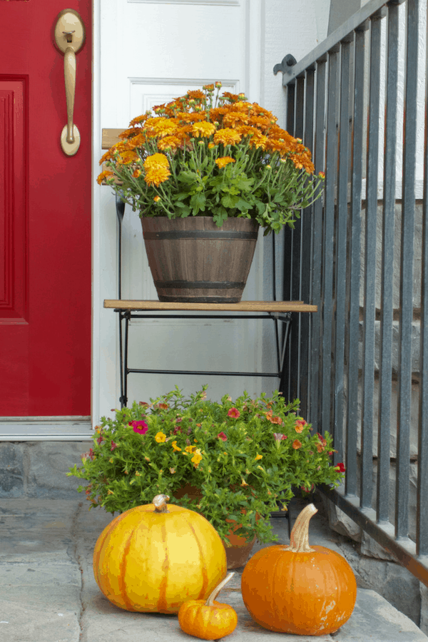 Fall Porch -Rustic Orange Mums with pumpkins in oranges in yellows.