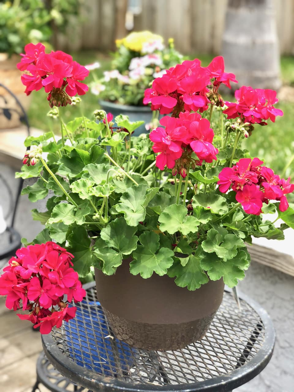 Summer Patio Ideas with Containter Plants